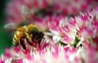 Цветы включают для пчел неоновую рекламу