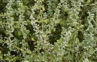 Уникальное растение пол-пала