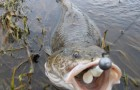 Как ловить налима
