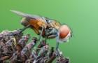 Насекомые-паразиты и хищники пчел