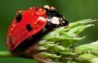 Новый способ определить любимые растения для насекомых