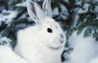 Охота на зайца на засидках