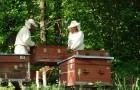Особенности содержания пчел в ульях-лежаках