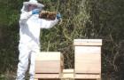 Правила обращения с пчелами