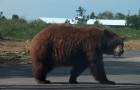 Правила поведения при случайной встрече с медведем