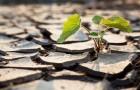 Тайна адаптации растении к окружающей среде раскрыта