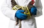 профилактика и лечение заболеваний домашней птицы