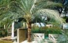 Проект сада «Оазис в пустыне»