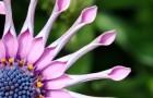 7 красивых но смертельно опасных цветов