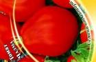 Сорт томата: Чалма