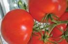 Сорт томата: Чарльстон f1