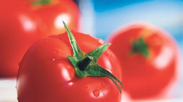 Сорт томата: Чудо алтая