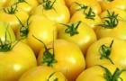Сорт томата: Элтон джон f1