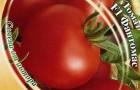 Сорт томата: Фантомас f1