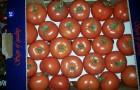 Сорт томата: Форте оранж f1