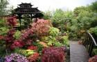 Краски весны и осени в японском саду
