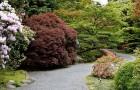 Кустарники для японского сада, формируемые как одиночные растения