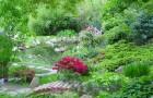 Обрезка деревьев и крупных кустарников в японском саду
