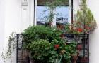 Озеленение балконов снизу