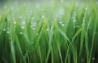 Питательные вещества для растений