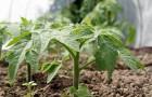 Почвенные смеси для выращивания рассады