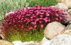 Почвопокровные растения (Видео)