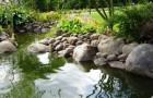 Ракопродуктивность водоемов