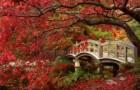 Расположение источников света в японском саду