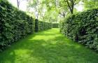Рецепты садовых замазок для живых изгородей