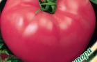 Сорт томата: Розбиф f1