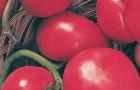 Сорт томата: Розина