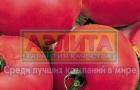 Сорт томата: Розовая андромеда f1