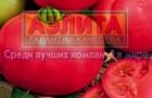 Сорт томата: Розовый сувенир