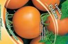 Сорт томата: Рыжик