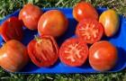 Сорт томата: Шахерезада