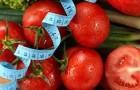Сорт томата: Шаолинь