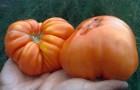 Сорт томата: Шапка мономаха