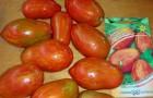 Сорт томата: Шерхан