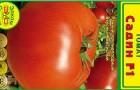 Сорт томата: Садин f1