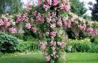 Садовые устройства для выращивания лиан