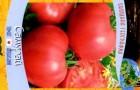 Сорт томата: Самурай