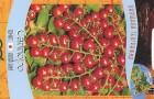 Сорт томата: Саппоро