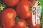 Сорт томата: Сайт f1