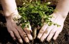 Сажаем деревья. Закладка сада (Видео)