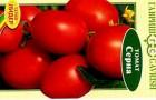 Сорт томата: Серна