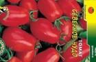 Сорт томата: Северное чудо