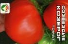 Сорт томата: Созвездие козерога