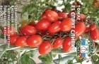 Сорт томата: Спрут черри f1