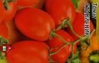 Сорт томата: Станичник