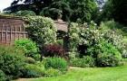 Свободно растущие живые изгороди